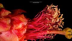 Close Flower (Jefferson Allan - Photographer) Tags: fotografia campinas jeffersonallan macro pretoebranco art photo