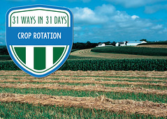 CropRotation (IowaNRCS) Tags: laurasg4projects cd10 macintoshhd nrcsia99371tif photocatalog catalog g4 hd lauras macintosh photo projects nrcsia990371tif 371 stripcropping crops farmstead strips iowa