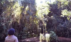 Curitiba - 07/2016 (Elisama Oliveira) Tags: outside trees nature me beautifulplace free bosquealemao