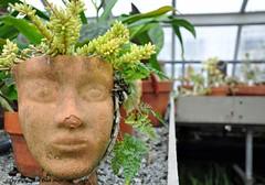 Plant Head (Trish Mayo) Tags: planter greenhouse garden wavehill gnneniyisi thebestofday