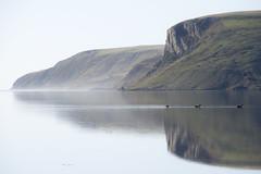 Three Swans (Ian@NZFlickr) Tags: papanui inlet black swans cliffs misty mist morning reflections extinct volcano dreamy dunedin otago nz