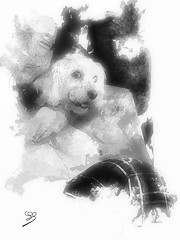 With Poupy (jeanchristophedonze) Tags: drawing blackandwhite animal dog hss