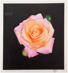Rose practice (da's art) Tags: derwentdrawing luminance polychromos rose flower coloredpencil artwork traditionalart drawing