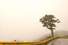 迷霧 迷路 (lgf55555(基福)) Tags: leica aposummicronm 50mmf2 asph 霧 峭壁 山崖 樹 獨立樹 孤獨 路 危險