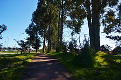 ''Arboles cotidianos'' (Vctor Nez) Tags: rbol arboles cotidiano cielo sky green verde celeste calle ciudad puertomontt chile