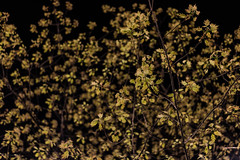 Spring at night (Daniel Kulinski) Tags: city windows urban building tree window photography office leaf spring europe image daniel space wide creative picture samsung poland center civic shape 1977 leafs metropolitan warszawa photograhy pl 30mm nx mazowieckie pruszkow samsungcamera nx1 kulinski samsungnx imageloger nx30mm samsungnx30mmf2 samsungnx30mm danielkulinski nx30mmf2 imagelogger samsungnx1