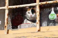 Desde una ventana en Rabat