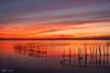 Atardecer en la albufera (Fran asensio) Tags: naturaleza albufera elsaler coloresnaturales valenciaparquenatural atardecerintenso