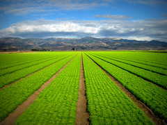 Salinas Valley Crop Rows, Chualar, California (Rod Heywood) Tags: green lines clouds rural salad farm patterns horizon perspective salinas lettuce rows fields crops agriculture countryroad salinasvalley chualar croprows