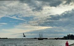 Harbourfront Sailing (Georgie_grrl) Tags: toronto ontario boat sailing gulls photographers social photowalk harbourfront lakeontario outing kajama topw