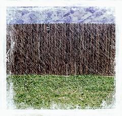 Rain {207/366} (therealjoeo) Tags: rain fence grass texture summer 365 365project 366