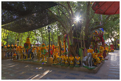 morning at the shrine (Dax Ward Photography) Tags: thailand religion buddhism travel roosters boat