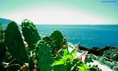 Summer time (Crupi Giorgio (official)) Tags: italia liguria genova nervi sole mare cielo natura estate panorama passeggiata canon canoneos7d sigma sigma1020 italy sun sea sky nature summer seascape relax