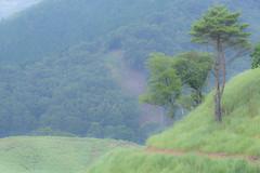 21Tonomine Highland (anglo10) Tags:    field  japan