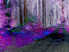 (psychedelic world) Tags: wood trees forest violet fork psychedelic wald bäume wege violett psychedelisch sachsenwald weggabelung psychedelicworld
