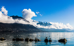 Life's Birds (Anadal Xel-Grip) Tags: world france annecy beautiful landscape photo cityscape pics picture streetlife