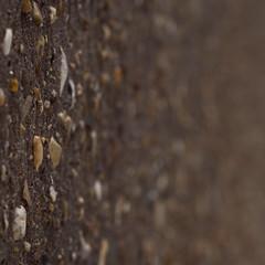 stones (Cosimo Matteini) Tags: cosimomatteini ep5 olympus pen m43 mft mzuiko45mmf18 wall stones dof