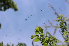 Bois de Vincennes, Paris (Madme Rve) Tags: vincennes bois wood foret forest pomme pin paquerette flower yellow pissenlit insecte nature violette campanule papillon butterfly
