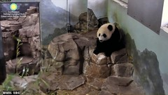2016_08-10f (gkoo19681) Tags: beibei waterfun wetfeet sillygoober ccncby nationalzoo