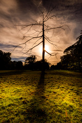 Nostell Priory (Dreampixels LTD) Tags: nostell priory nostellpriory lonetree sunset landscape light sky