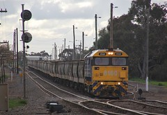 8160 is only minutes away from departing Murtoa on MC1 (bukk05) Tags: 8160 81class wimmera westernstandardgaugeline wagons wheat mc1 explore export engine emd emd16645e3b emd16645f3b electromotivediesel railway railroad railpage rp3 rail railwaystation railwaystations train tracks tamron tamron16300 yard yarriambiackshire yarriambiack overcast photograph photo pn pacificnational pnblueandyellow loco locomotive jt26c2ss horsepower hp grain graincorp flickr freight diesel dieselelectriclocomotive station standardgauge sg 2016 winter australia artc zoom canon60d canon clyde clydeengineering victoria vr victorianrailway vline victorianrailways mainline murtoa marmalake signal railpage:class=47 railpage:loco=8160 rpaunsw81class rpaunsw81class8160