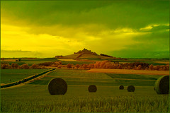 2016 08 20 Warburg IR 680 - 08 (Mister-Mastro) Tags: 680nmfilter irinfrared sony5n warburg harvest ernte green grn yellow gelb