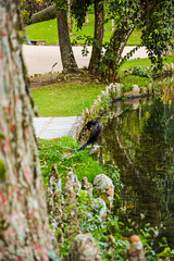 DSC_5392 (sergeysemendyaev) Tags: 2016 rio riodejaneiro brazil jardimbotanico botanicgarden     outdoor nature plants    green  beauty nikon
