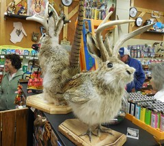 Jackapheasants at Exxon Country Store (Jeffxx) Tags: wyoming dubois 2016 september jackalope store exxon country