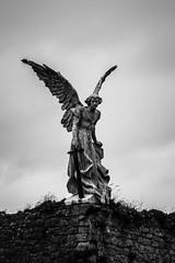 Angel (Rafa Devesa) Tags: cantabria altocampoo reinosa argeso gato avestruz paisaje atardecer surf agua mar angel flor azul fuentede picosdeeuropa espaa spain nikon d3200