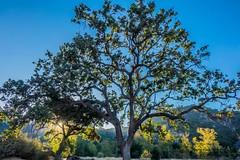 (Mickey Katz) Tags: park travel blue vacation sky sun nature beautiful beauty photo amazing europe outdoor awesome culture dramatic tourist breathtaking bestshot supershot flickrsbest amazingphoto abigfave anawesomeshot flickrlovers