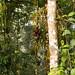 Floresta de grande diversidade
