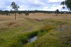 Burying Ground Creek (dustaway) Tags: autumn water creek landscape australia drought nsw australianlandscape grazing paddocks northerntablelands newenglandtablelands streamscape buryinggroundcreek australiancreeks