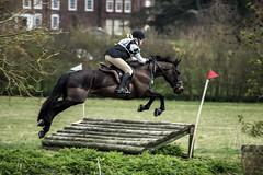 The Jump (HanWhittle) Tags: cambridge horses horse animals outside outdoors jump jumping movement nikon action run riding jockey sprint rider canter gallop grantchester nikond3200 d3200