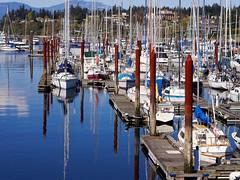 Plenty Pleasure Craft (PRS Images) Tags: boats harbour britishcolumbia vancouverisland comox flickrlounge olympusem1