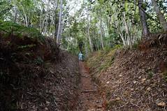 A través del Monte (lezumbalaberenjena) Tags: escambray guamuhaya mountains montañas cuba 2015 jungla jungle bosque lluvioso tropical rainforest green plants trees lezumbalaberenjena