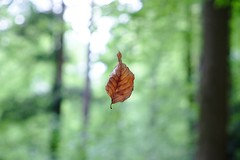 Flying Leaf (Faldrian.) Tags: tree flying leaf woods lightning blatt wald baum