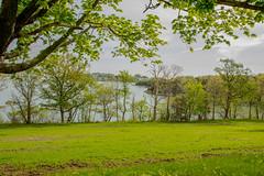 worlds end , Hingham 5-15-15 089.jpg (jlucierphoto) Tags: park trees plant tree nature grass outdoor worlds end serene maples hingham massachusettts