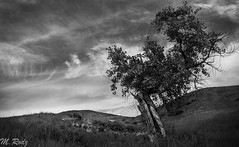 Surviving (Marcel Rodz) Tags: sky usa naturaleza white mountain black tree blanco nature clouds landscape arbol us nikon colorado y negro paisaje denver cielo nubes monocromatic montanas surviving d610 monocromatico rodz sobreviviendo rodriguezpuebla