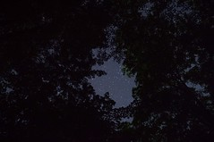 Stars (jconstable16) Tags: trees summer nature night canon stars photography photographer nightscape pennsylvania astro pa galaxy astrophotography nightsky nightscenery galactic milkyway naturephotography starscape canonphotos canonphotography canont5 starscenery
