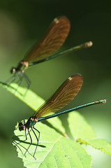 libe3 (bidueiro) Tags: naturaleza insectos macro macrofotografa