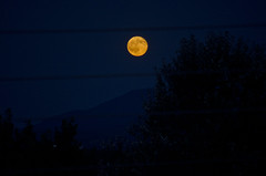 The whole of the moon* (AlexGinger) Tags: moon luna trees nature natura landscape night summer greece full orange