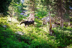 2016Upperpaintbrush13s-89 (skiserge1) Tags: park camping lake mountains america freedom hiking grand jackson national backpacking wyoming teton tetons