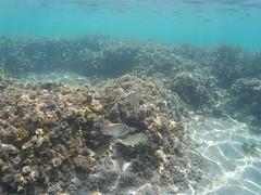 Cabo de Palos, under water. Spain. (Sonia.Solano) Tags: mar mediterráneo cabodepalos murcia españa spain snorkel snorkeling diving buceo bajoelagua underwater
