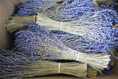 Lavanda de la Provenza (Micheo) Tags: flowers flores souvenirs nice memories lavender bunch recuerdos ramos mercadillo niza lavanda driedflowers floressecas mercadodelasflores