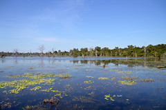 Water in the forest (Isabel-Valero) Tags: travel blue lake water landscape asia cambodia camboya