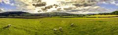 Countryside, United Kingdom (Syed Ali Warda) Tags: city summer holiday green clouds canon landscape landscapes warm cityscape yorkshire lakedistrict cityscapes sheeps panaroma pana canon7d syedaliwarda