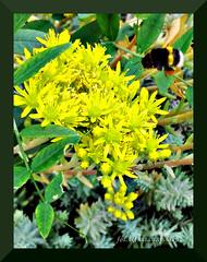 wsppraca :) (Renata_Lipiska) Tags: plants plant flower insect outdoor partnership cooperation kwiat owad rolina gadfly roliny bk wsppraca