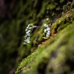 curl (jojoannabanana) Tags: plant detail macro leaves closeup square moss dof bokeh squareformat curl rockcitypark