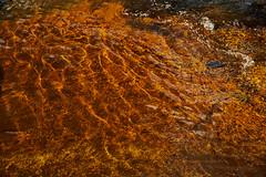 Water Undulations (II) (Modesto Vega) Tags: orange motion water flow nikon gras undulation fullframe d600 nikond600 rivertormes grasblade