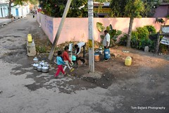 D72_9433 (Tom Ballard Photography) Tags: 20160314 indiaadventure part4 flowers cows pigs poop peeing people trash taxi food